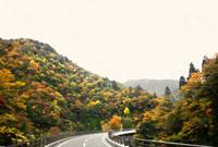 紅葉の山と道路
