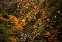 紅葉の山 00693011559| 写真素材・ストックフォト・画像・イラスト素材|アマナイメージズ