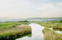 野原と小川