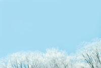 雪の積もった木と青空