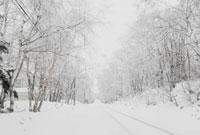 雪道 00693011614| 写真素材・ストックフォト・画像・イラスト素材|アマナイメージズ