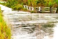 雨に濡れた道
