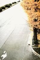 イチョウ 00693012123| 写真素材・ストックフォト・画像・イラスト素材|アマナイメージズ