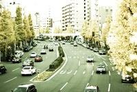 イチョウ並木の都会の道路 00693012160| 写真素材・ストックフォト・画像・イラスト素材|アマナイメージズ