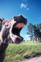 馬 00724000183| 写真素材・ストックフォト・画像・イラスト素材|アマナイメージズ