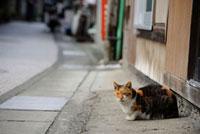 店先のネコ