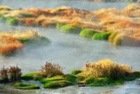 湧きだす温泉と秋の草 00724012473| 写真素材・ストックフォト・画像・イラスト素材|アマナイメージズ