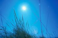 草と太陽 00730010489| 写真素材・ストックフォト・画像・イラスト素材|アマナイメージズ