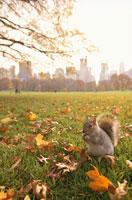 落ち葉とリス セントラルパーク ニューヨーク