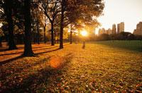 秋のセントラルパークからのビル群と朝日 ニューヨーク