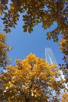 紅葉に囲まれるマンハッタン摩天楼