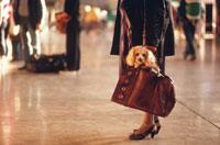 かばんに入った子犬