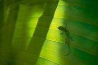 ヤモリのシルエット 00745000264| 写真素材・ストックフォト・画像・イラスト素材|アマナイメージズ