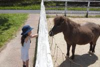 牧場の馬と女の子