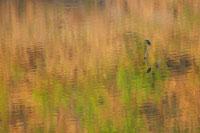 湖面とカワセミ