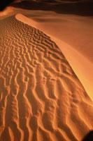 風でうねりのある広大な砂丘(オレンジ色) カリフォルニア