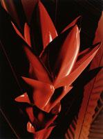赤い熱帯植物のアップ CG