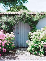 紫陽花に囲まれたドア