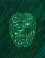 脳             CG