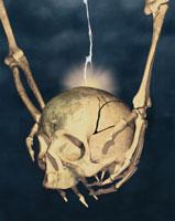 骸骨 CG 00819000008| 写真素材・ストックフォト・画像・イラスト素材|アマナイメージズ