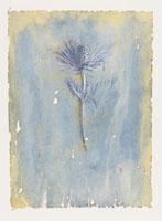 エリンジウムの花 イラスト