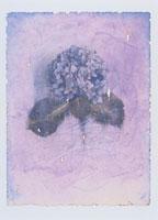 紫のアジサイの花 イラスト
