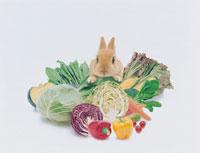 ウサギ(ネザーランド・ドワーフ) 00837010062  写真素材・ストックフォト・画像・イラスト素材 アマナイメージズ
