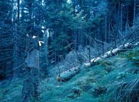 酸性雨の降る黒い森 バーデンバーデン ドイツ