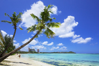 タモンビーチとヤシの木