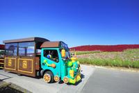 ひたち海浜公園のコキアとシーサイドトレイン 01010026766| 写真素材・ストックフォト・画像・イラスト素材|アマナイメージズ
