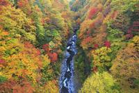中津川渓谷の紅葉 01010026779| 写真素材・ストックフォト・画像・イラスト素材|アマナイメージズ