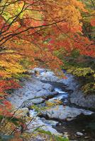 中津川渓谷の紅葉 01010026781| 写真素材・ストックフォト・画像・イラスト素材|アマナイメージズ
