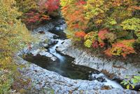 中津川渓谷の紅葉 01010026782| 写真素材・ストックフォト・画像・イラスト素材|アマナイメージズ
