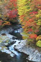 中津川渓谷の紅葉 01010026784| 写真素材・ストックフォト・画像・イラスト素材|アマナイメージズ
