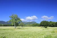 会津高原の蕎麦畑 01010026844| 写真素材・ストックフォト・画像・イラスト素材|アマナイメージズ