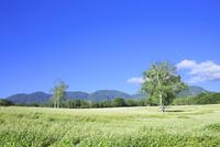 会津高原の蕎麦畑 01010026846| 写真素材・ストックフォト・画像・イラスト素材|アマナイメージズ
