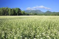 会津高原の蕎麦畑 01010026850| 写真素材・ストックフォト・画像・イラスト素材|アマナイメージズ