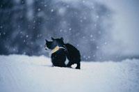 二匹の猫 01042000116| 写真素材・ストックフォト・画像・イラスト素材|アマナイメージズ