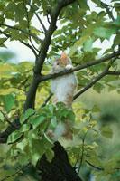 木に登る子猫 01053018917| 写真素材・ストックフォト・画像・イラスト素材|アマナイメージズ
