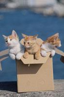 ダンボールに入った3匹の子猫 01053023013| 写真素材・ストックフォト・画像・イラスト素材|アマナイメージズ