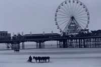 砂浜を歩くロバと桟橋と観覧車 ブラックプール イギリス