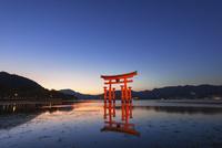 ライトアップされた嚴島神社の大鳥居 01072022849| 写真素材・ストックフォト・画像・イラスト素材|アマナイメージズ