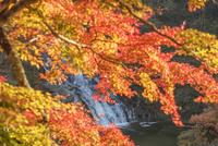 養老渓谷の粟又の滝 01072026687  写真素材・ストックフォト・画像・イラスト素材 アマナイメージズ