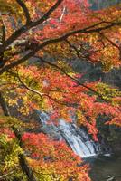 養老渓谷の粟又の滝 01072026788  写真素材・ストックフォト・画像・イラスト素材 アマナイメージズ