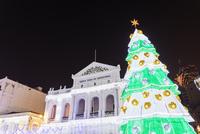 セナド広場のクリスマスツリー 01072027049| 写真素材・ストックフォト・画像・イラスト素材|アマナイメージズ