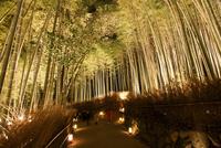 嵐山花灯路 竹林の道