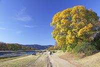 鴨川の紅葉