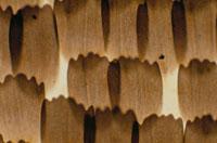 蝶の羽の顕微鏡写真
