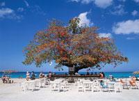 ビーチの大樹とミニ・バー モンデゴ・ベイ ジャマイカ