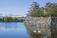 松本城と内堀のハクチョウ 01109092543| 写真素材・ストックフォト・画像・イラスト素材|アマナイメージズ
